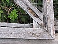 Plants in an old wooden frame.jpg
