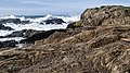 Point Lobos State Natural Preserve 1 18 19 (45892334785).jpg