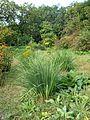 Poltava Botanical garden (22).jpg
