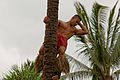 Polynesian Cultural Center - Samoa Tree Climber (14060038005).jpg
