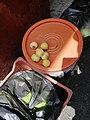 Pomarosas para su venta.jpg