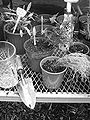 Potting-bench-county-clerk.jpg