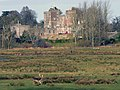 Powderham Castle and Deer Park - geograph.org.uk - 1240088.jpg