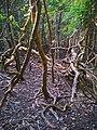 Profunda of Sundarbans.jpg