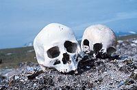 Partial human skulls