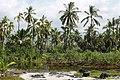 Puuhonua o Honaunau Historical Park, Captain Cook (504631) (24023378581).jpg