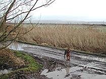 Puxton Moor - geograph.org.uk - 98225.jpg