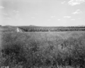 Queensland State Archives 1819 Rhodes Grass Tobacco rotation Regional Experiment Station Ayr November 1955.png
