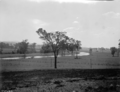 Queensland State Archives 1875 Views of Beaudesert and Innisplain districts c1955.png