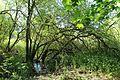 Réserve naturelle régionale des étangs de Bonnelles le 26 mai 2017 - 27.jpg