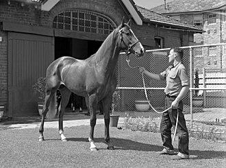 Queensland Guineas - Aboukir, 1955 winner