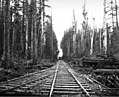 Railroad tracks in the woods, with locomotive in distance and crew on handcar on right, Copalis Lumber Company, near Carlisle (KINSEY 2072).jpeg