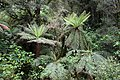 Rain Forest 1 (30849869353).jpg