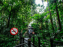 Photograph of a wooden walkway in a jungle with two people observing a waterfall