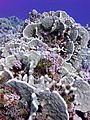 Reef3734 - Flickr - NOAA Photo Library.jpg