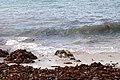 Relâcher phoques Océanopolis 177.jpg