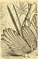 Reptiles and birds - a popular account of the various orders; with a description of the habits and economy of the most interesting (1869) (14748824255).jpg
