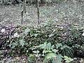 Rezerwat przyrody Dęby w Meszczach 11.32.jpg