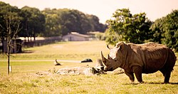 Rhino on the Road Safari.jpg