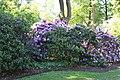 Rhododendronpark Bremen 20090513 005.JPG