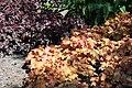 Rhododendronpark Bremen 20090513 161.JPG