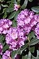 Rhododendronpark Bremen 20090513 253.JPG