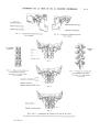 Richer - Anatomie artistique, 2 p. 13.png