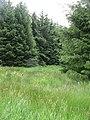 Ride, Cloich - Grassfield Forest - geograph.org.uk - 1386063.jpg