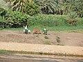 River Nile 23.JPG