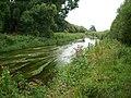 River Otter - geograph.org.uk - 906174.jpg