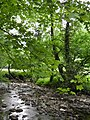 Rivière (Les Planches-près-Arbois) (1).jpg
