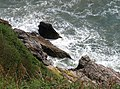 Rocks below the coastal path - geograph.org.uk - 817577.jpg
