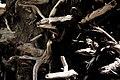 Roots (156307183).jpeg