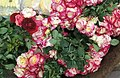 Roses for sale in Pune, India.jpg