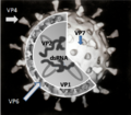 Rotavirus Structure.png