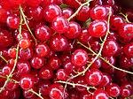 Rote Johannisbeeren frisch gepflückt.JPG