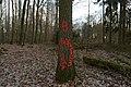 Rote Waldameise (Kleinottweiler) 2019-02-22 (02).jpg