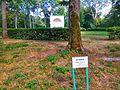 Rotonda in Oleksandria Park 3.jpg