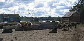 Rural-area-Pudozhsky District-karelia-republic-june-2005.jpg