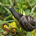 S is for Snail.jpg
