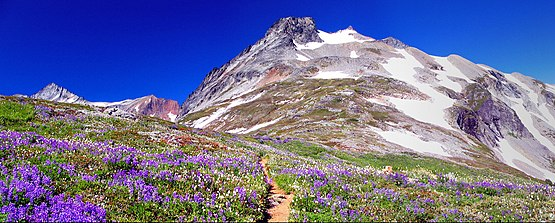 Alpine tundra in the North Cascades of Washington, United States Sahale Peak.jpg