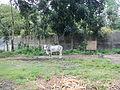 SantaTeresita,Batangasjf1811 19.JPG