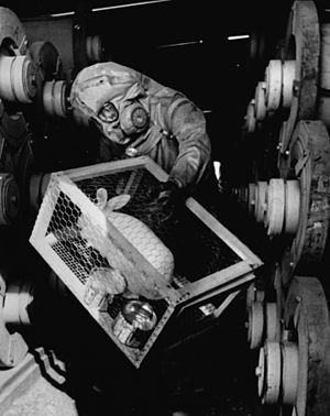 Rocky Mountain Arsenal - Rabbit used to check for leaks at Sarin nerve gas production plant. (photo 1970)