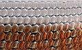 Scales - Cyclodomorphus michaeli (8813800297).jpg