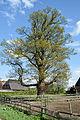 Schleswig-Holstein, Neuendeich, Naturdenkmal 35-01 NIK 2986.JPG