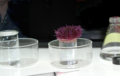 Sea urchin test method - water pollution - EPA.png