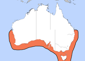 Distribution of Sepia apama