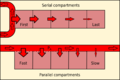 Series and parallel compartments.png