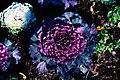Shades Of Purple (240822487).jpeg