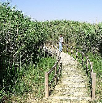 Nature reserves in Jordan - Reeds in Shaumari